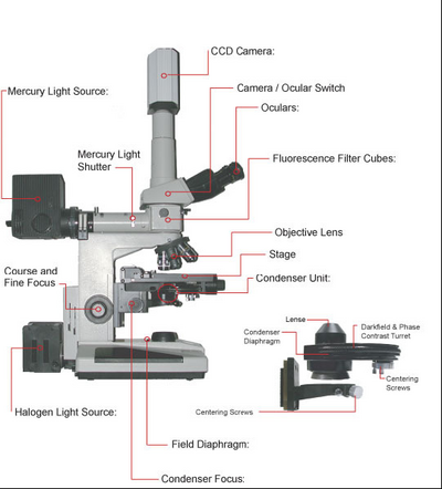 Main pagebphs 4090microscopy i physics wiki fig5 microscopeg ccuart Image collections